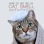 How to Remove Cat Urine Smell