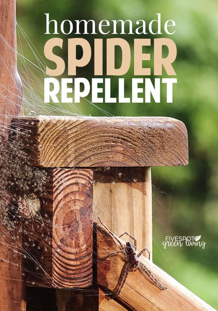 home remedy using peppermint oil for spiders