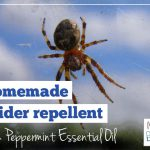 Homemade Spider Repellent with Essential Oils