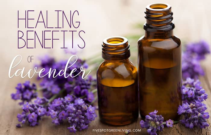 healing benefits of lavender