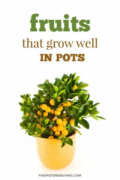 fruits that grow well in pots