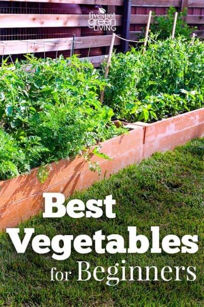 vegetables for beginners