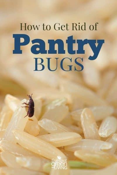 get rid of pantry bugs