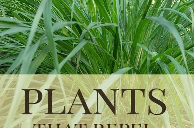 best wasp deterrent plants