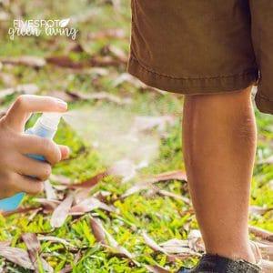 tick repellent tea tree oil