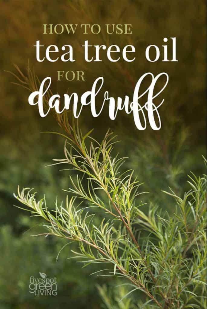 tea tree oil for dandruff