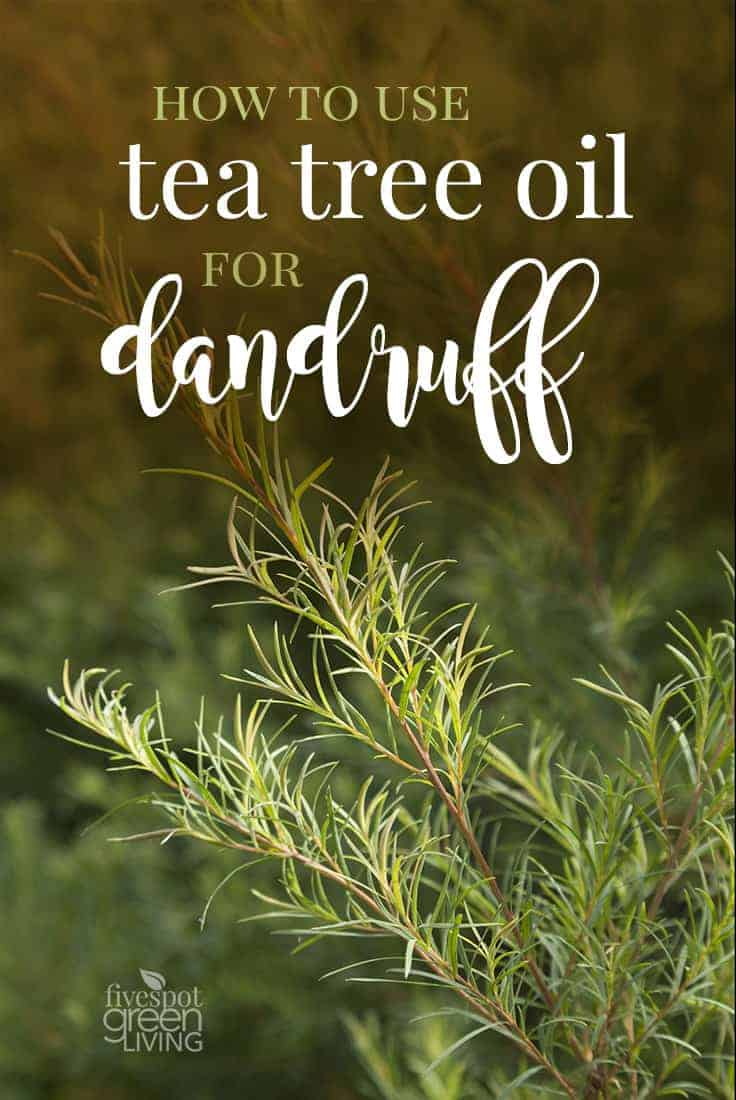 tea tree oil for dandruff