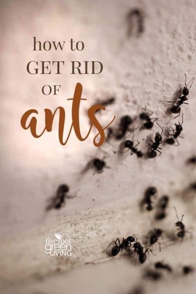 get rid of ants