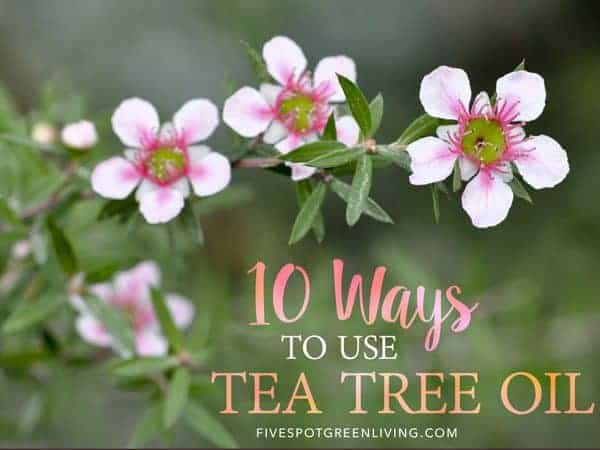 10 ways to use tea tree oil