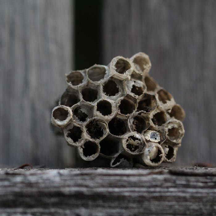 Essential Oils to Repel Wasps