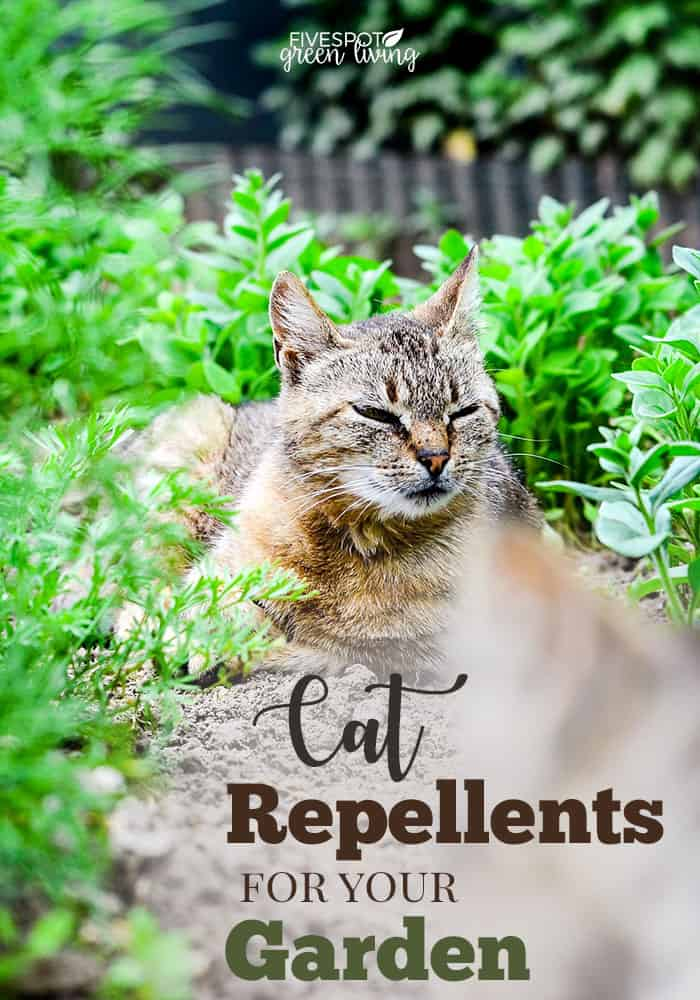 cat repellent plants