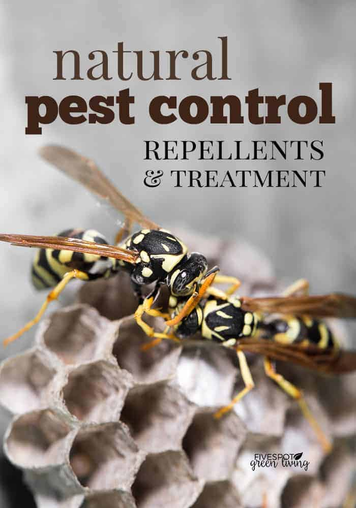 Natural Pest Control Treatments