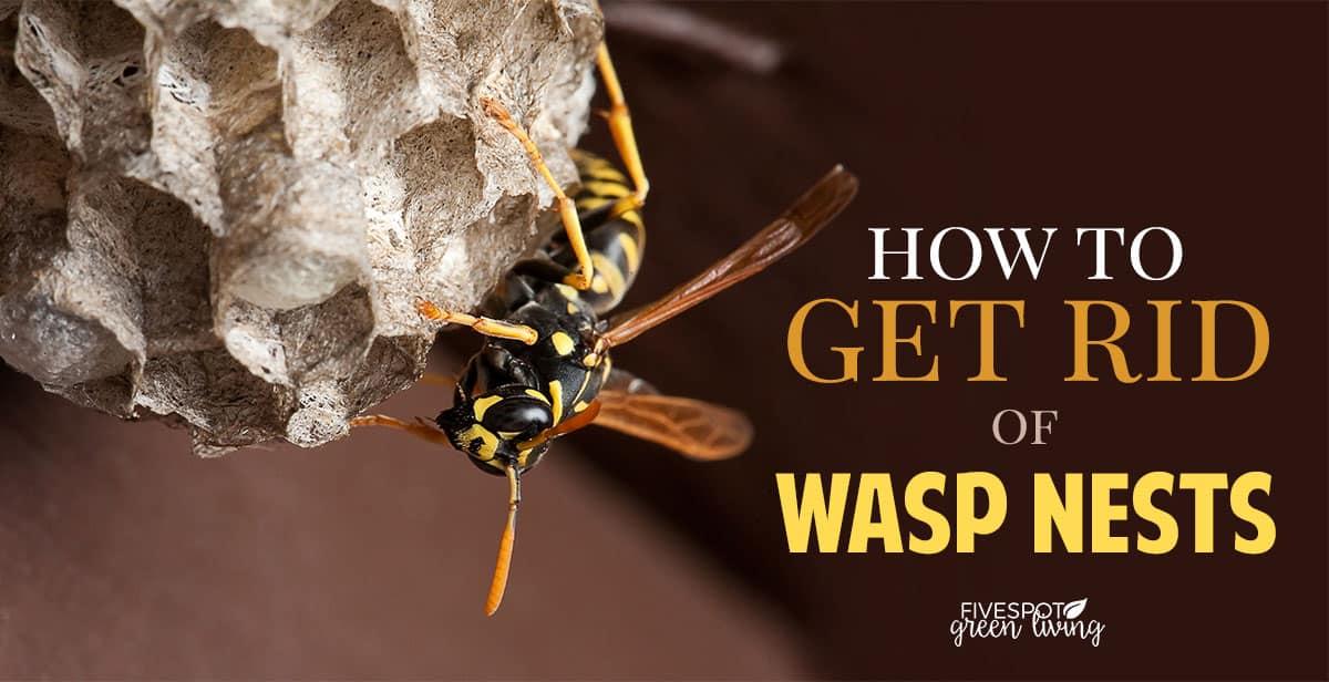 get rid of hornets nest