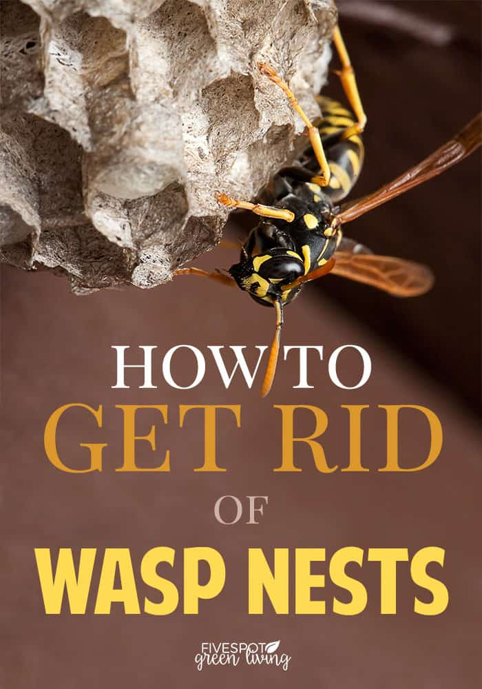 how to get rid of wasp nest