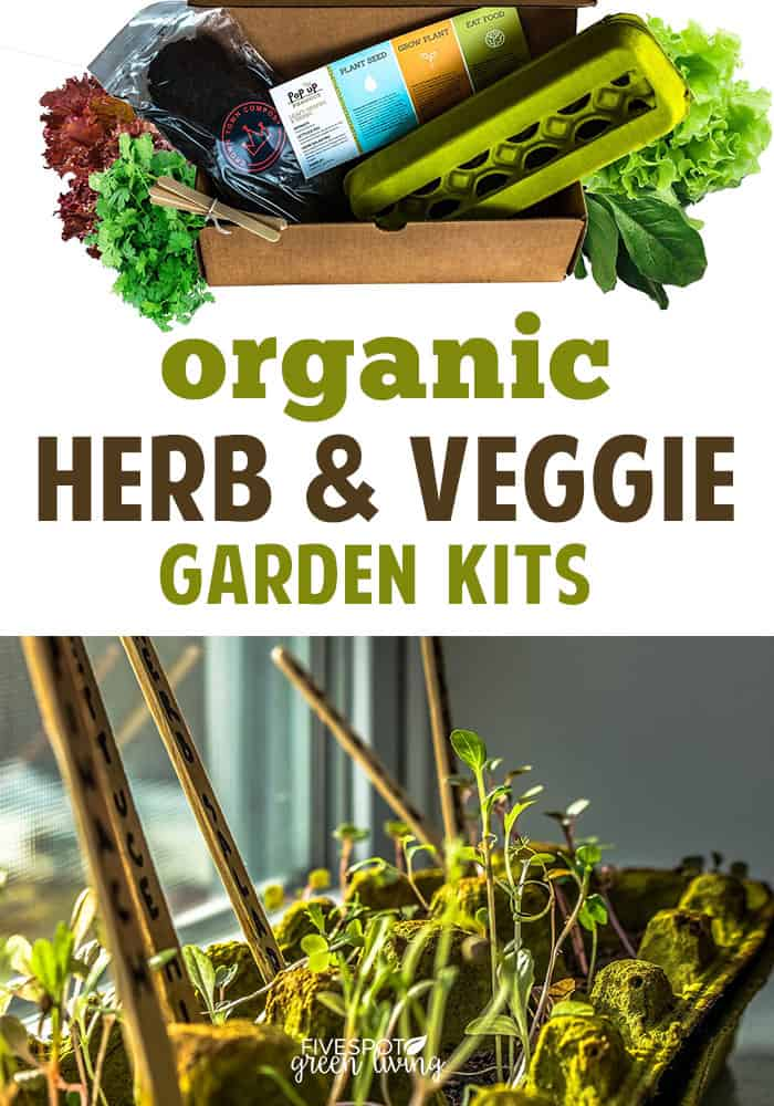 organic herb garden kit with egg container and seeds