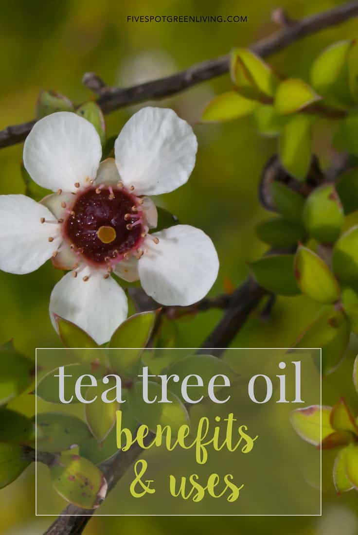 tea tree oil uses