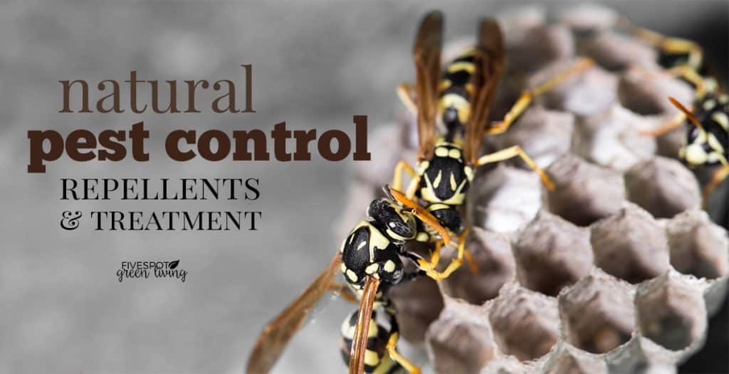 blog-pest-control-treatment-FB-1024x525 Why Use Peppermint Oil for Wasp Control
