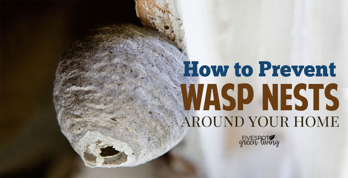 prevent wasps building nests