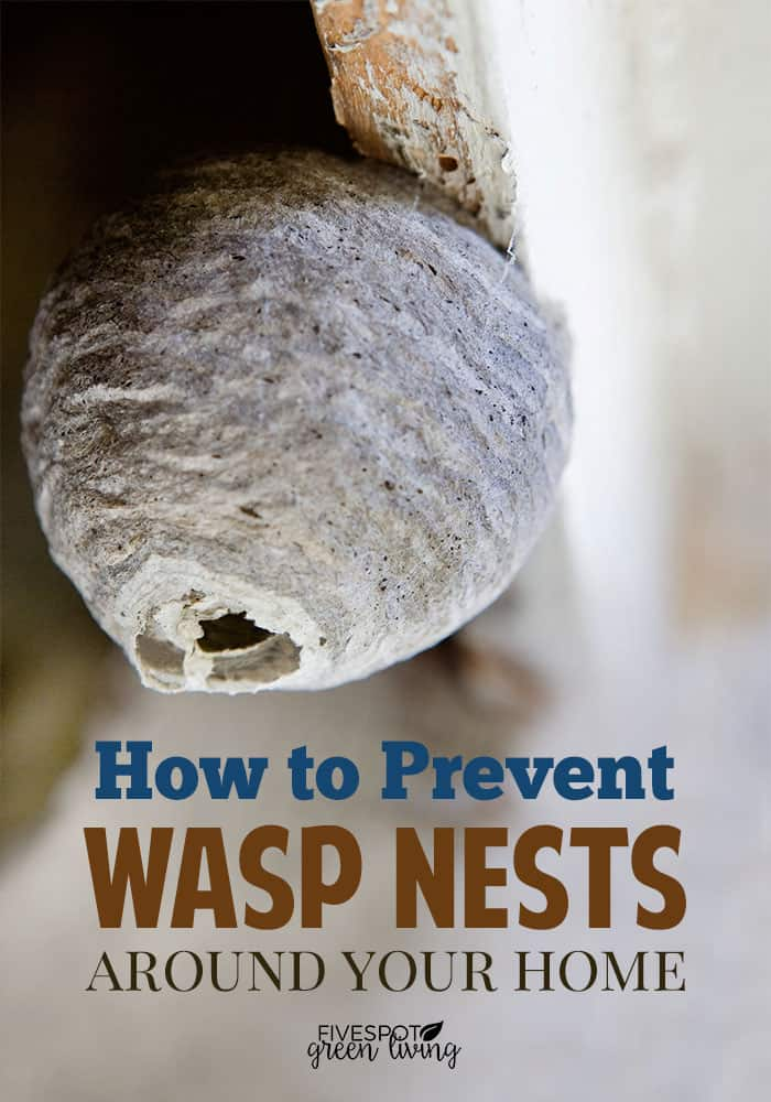 prevent wasp nests on eaves of porch