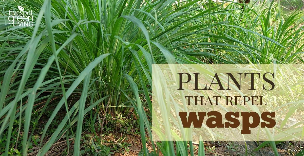 wasp deterrent plants