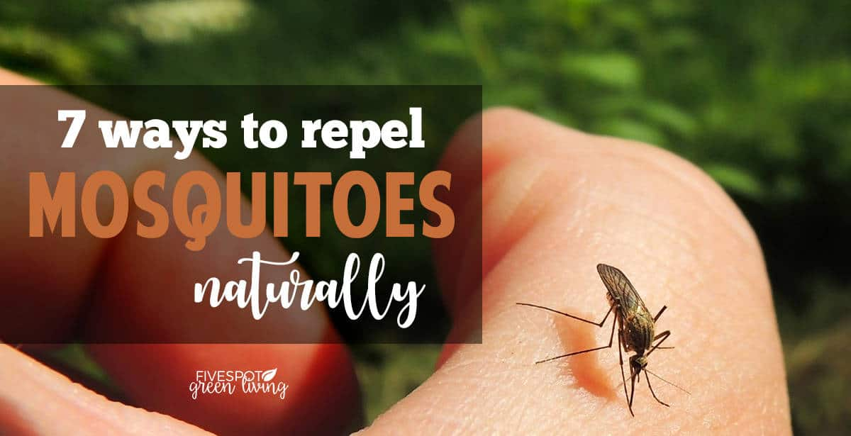 blog-repel-mosquitos-naturally-FB Natural Homemade Insect Repellent