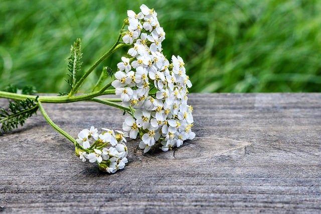 white yarrow herb on wooden table