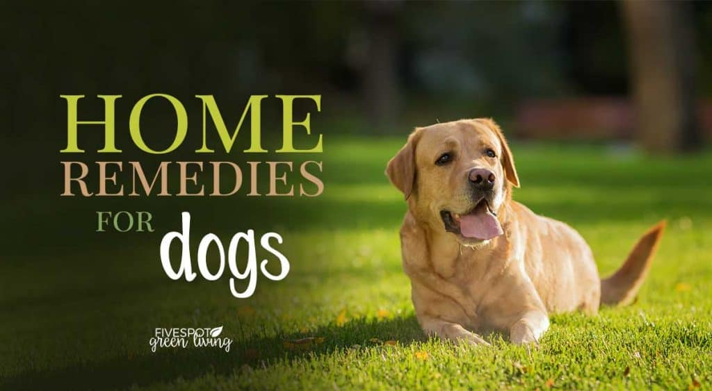 natural remedies for dogs allergies