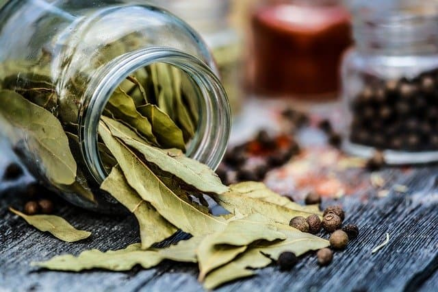 bay leaf leaves for pantry and flour bugs