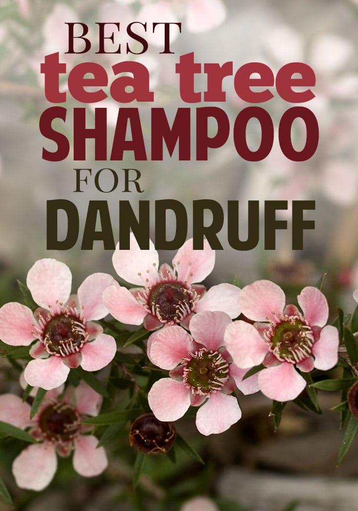the best tea tree oil shampoo for dandruff