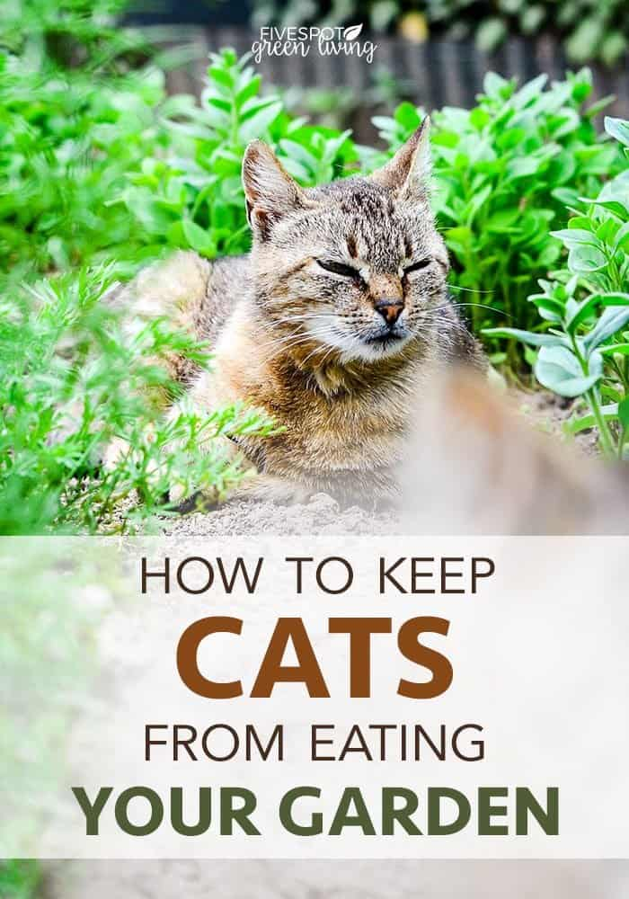 cat repellents for the garden