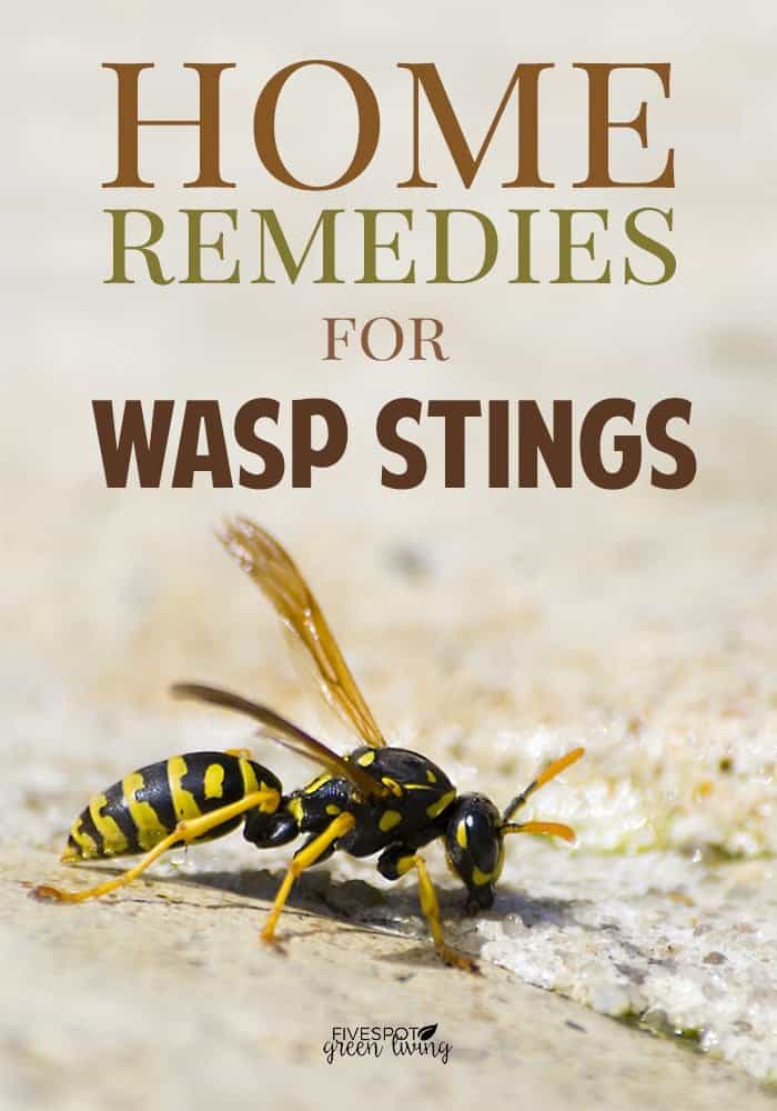 natural home remedies for wasp stings