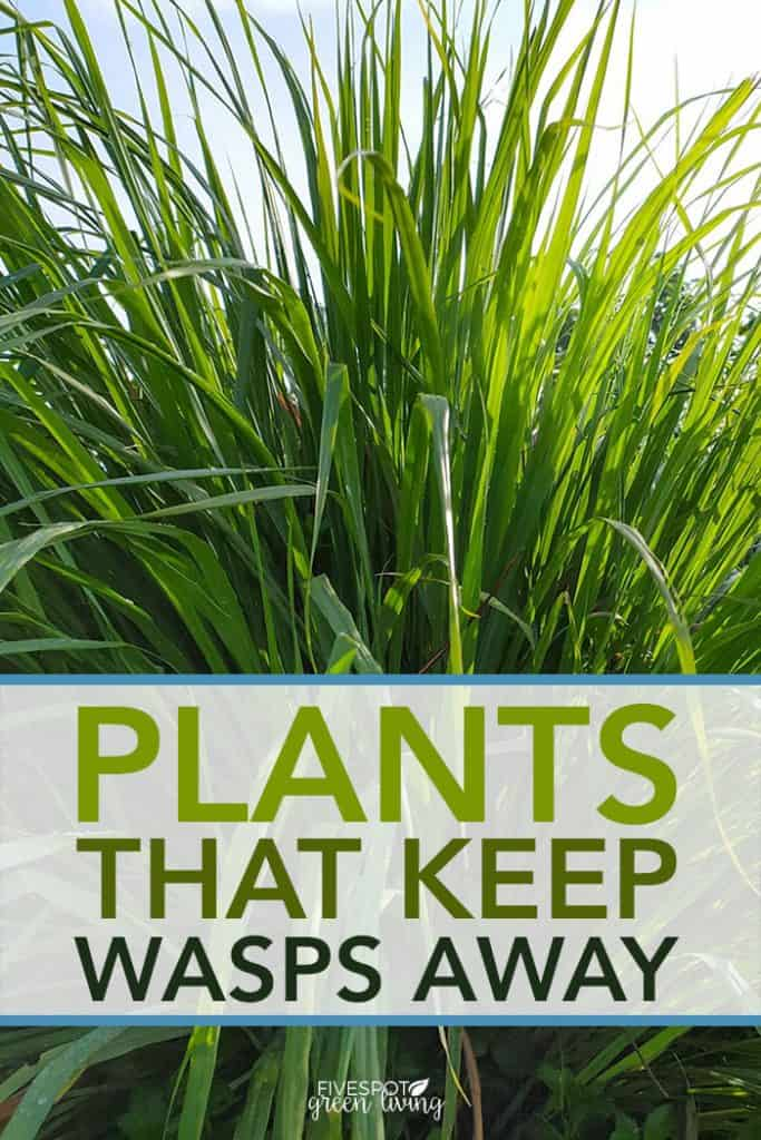 plants that keep wasps away