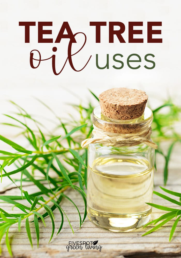 blog-tea-tree-oil-uses-PIN2 20 Amazing Tea Tree Oil Benefits for Health