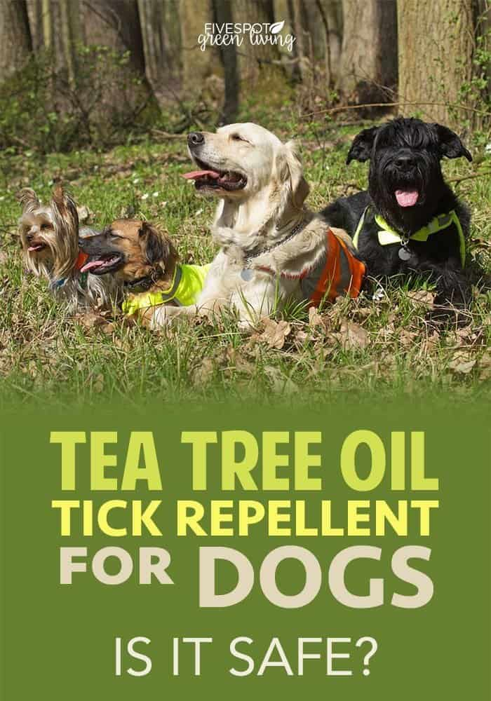 Tea Tree Oil Dog Spray Recipe for Fleas