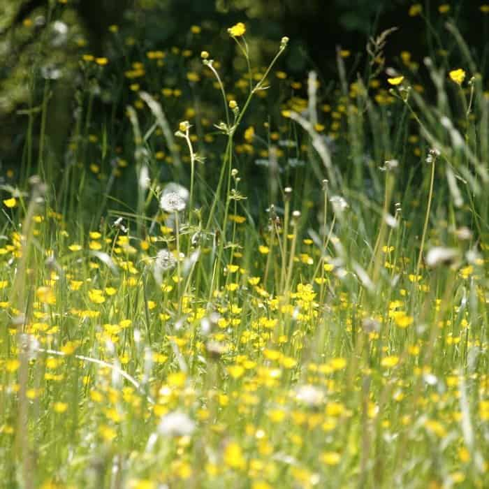 blog-meadow-allergies Home Remedies for Seasonal Allergies