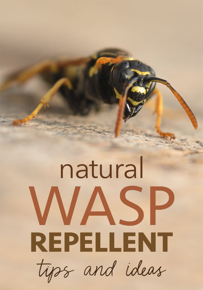 wasp repellent