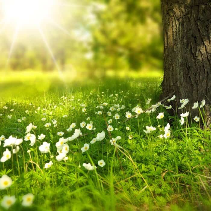spring-tree Home Remedies for Seasonal Allergies