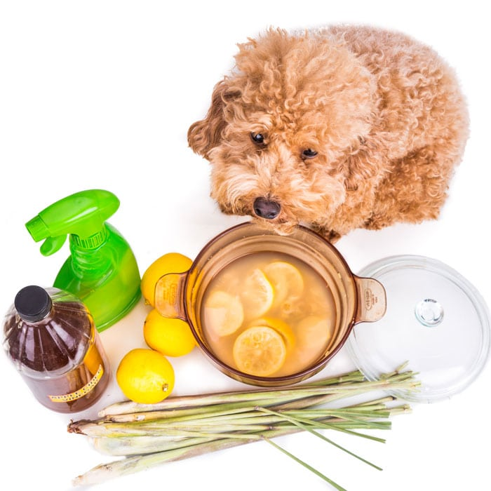 Fleas Naturally with Essential Oils