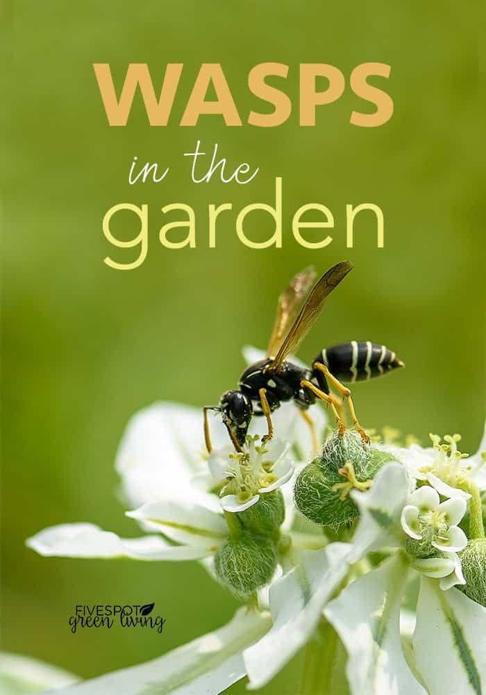 Are wasps good for the garden?