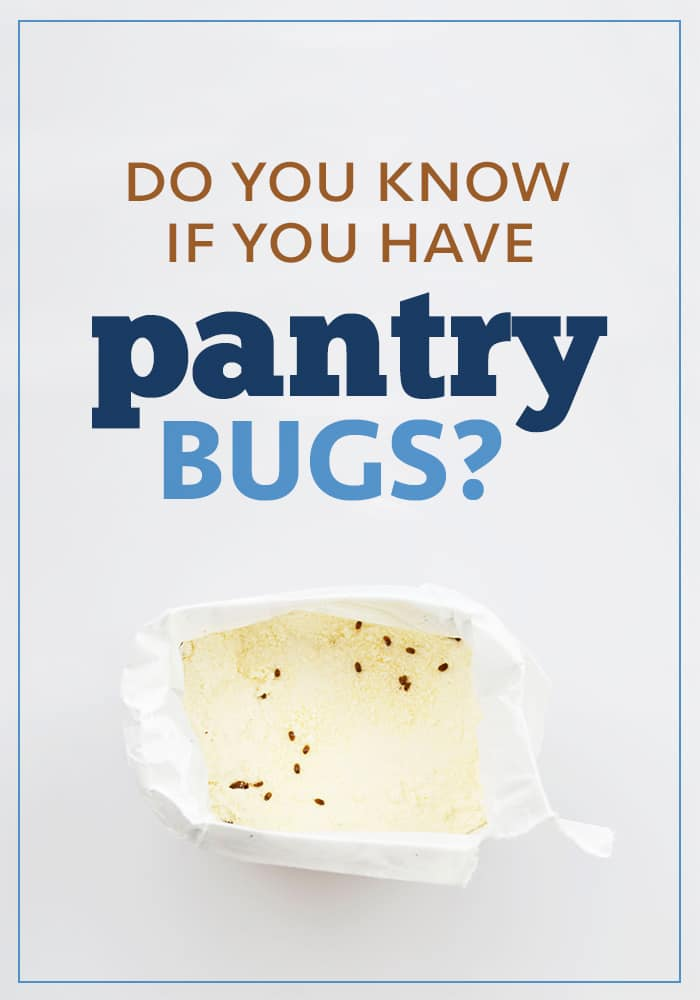 Do you know if you have pantry bugs? What do they look like in a bag of flour or rice?