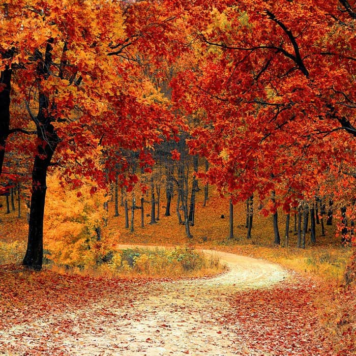 winding road in autumn leaves