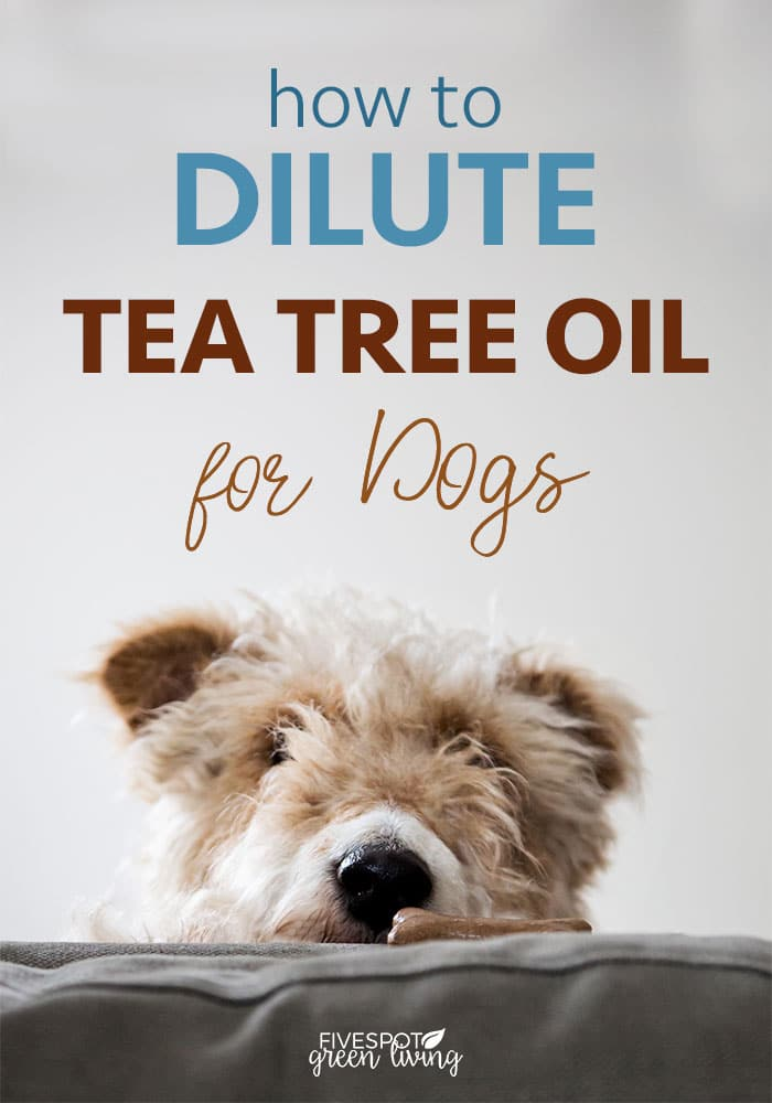 blog-how-to-dilute-tea-tree-oil-dogs-PIN How to Dilute Tea Tree Oil for Dogs