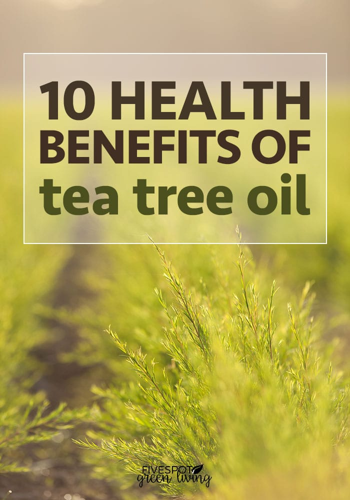 10 Health Benefits of Tea Tree Oil