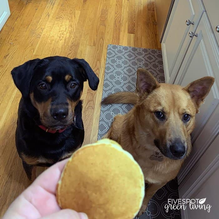 dogs with pancakes