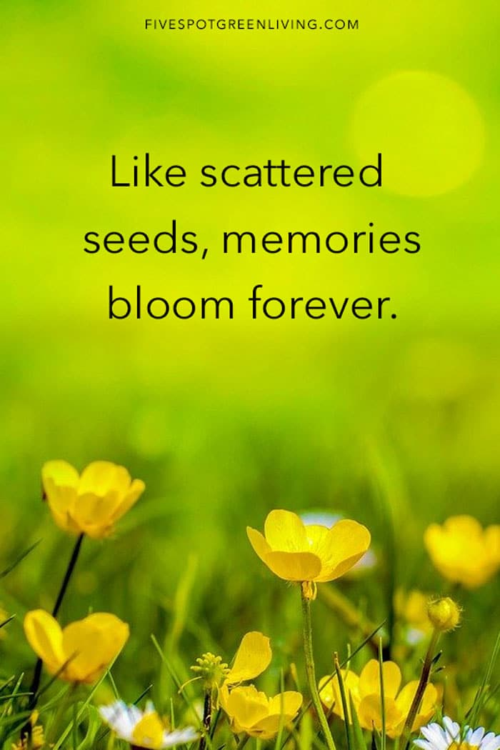 Like scattered seeds, memories bloom forever.