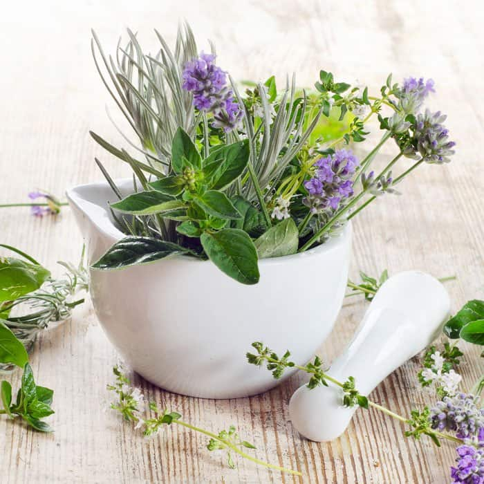 herbs for immune system