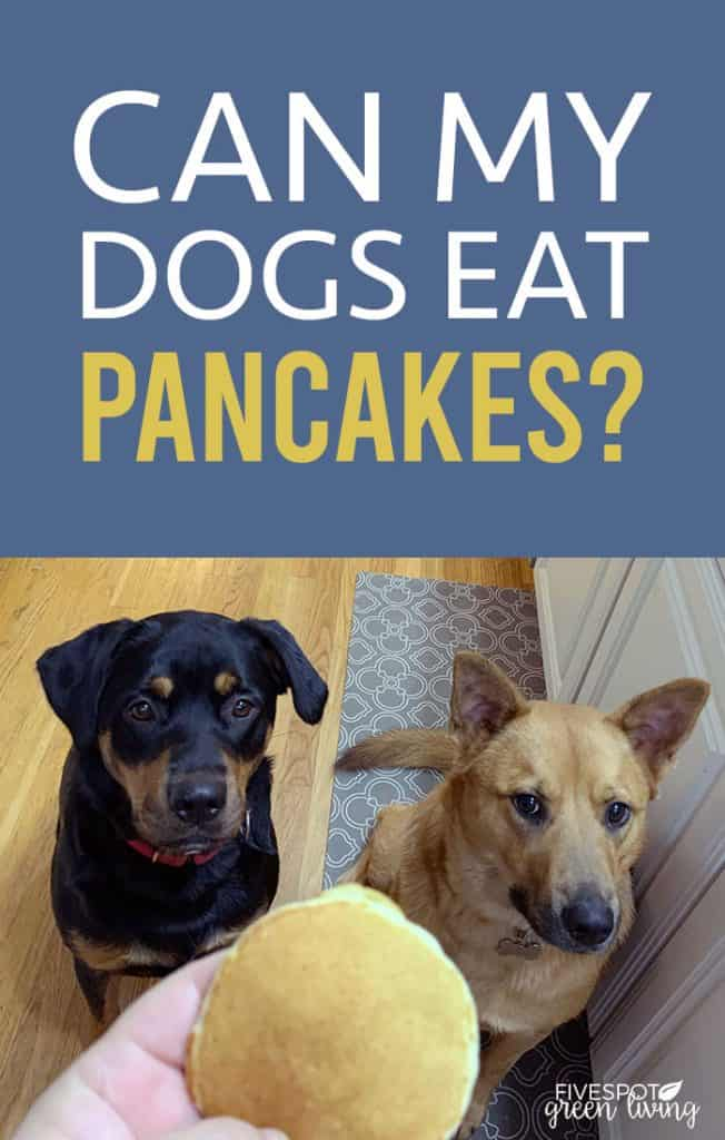Can dogs have pancakes