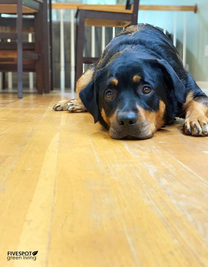 luna on kitchen floor