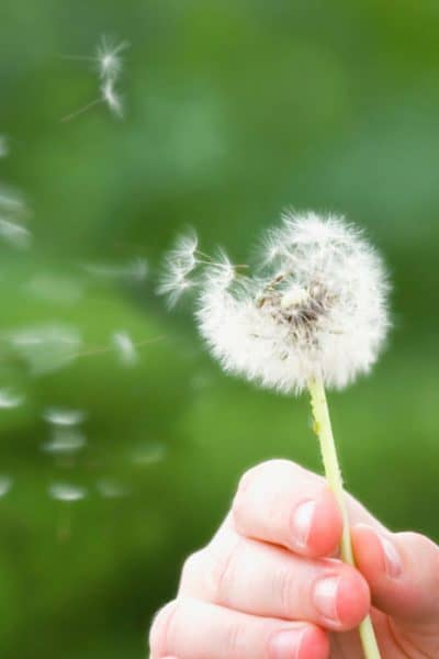 indian home remedies for pollen allergy