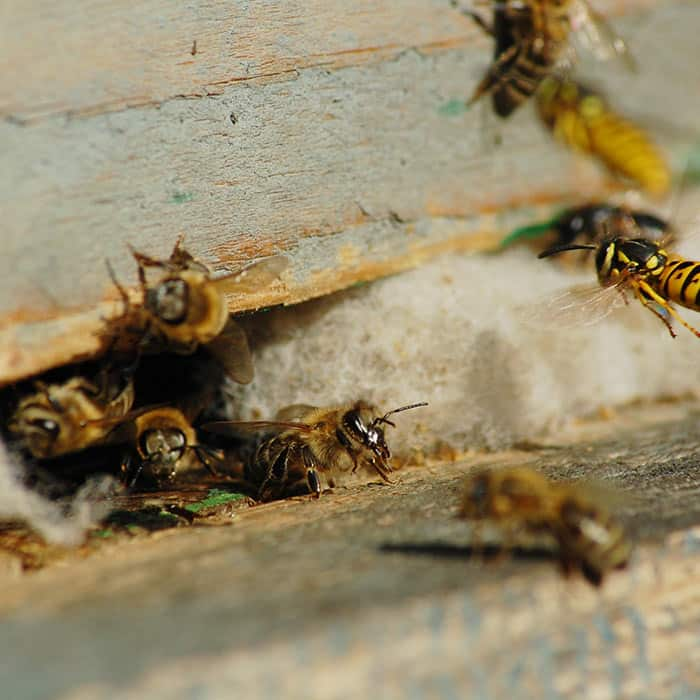 home remedies for wasps